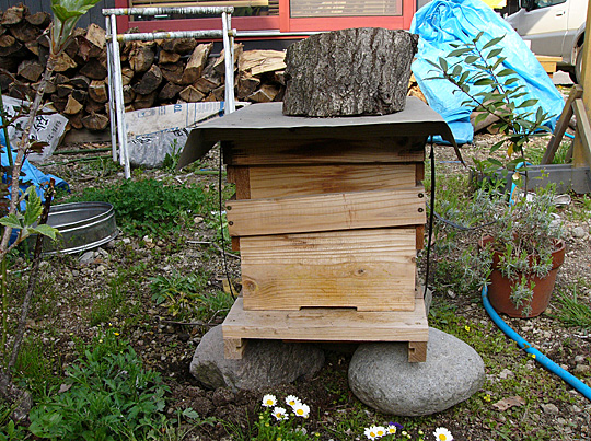 honeybee01