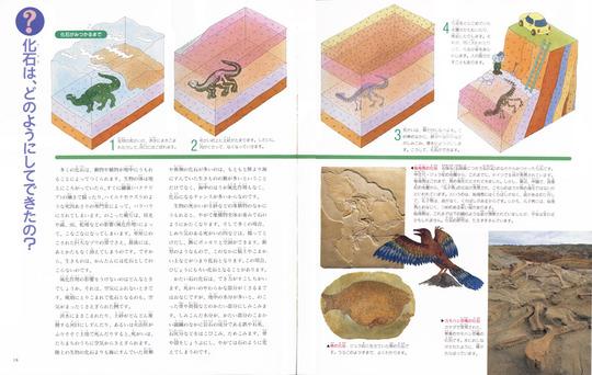 fossil7.jpg